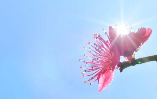 太陽の光をいっぱい浴びよう