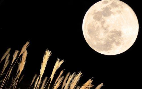 大好きなお月様
